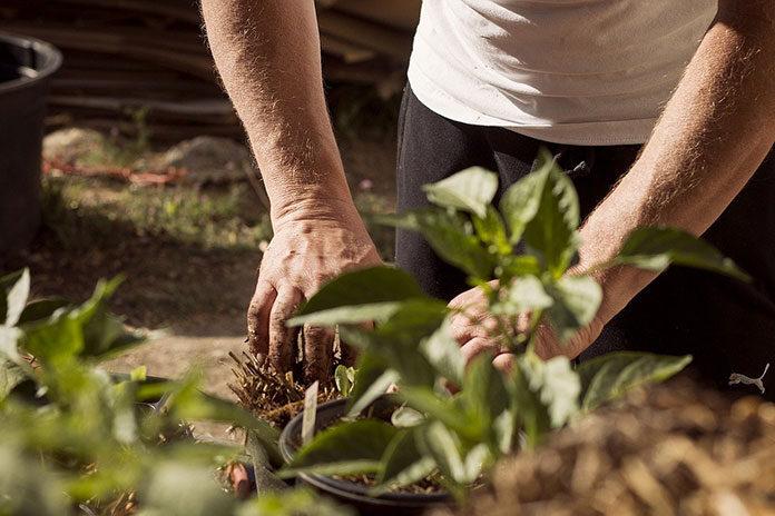 Własne plony z ogrodu – wybieramy siewnik do warzyw ręczny
